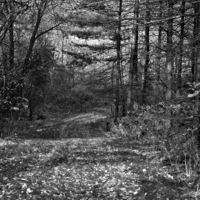 Pathway with Stippled Light