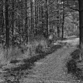 Pathway from Darkness to Light